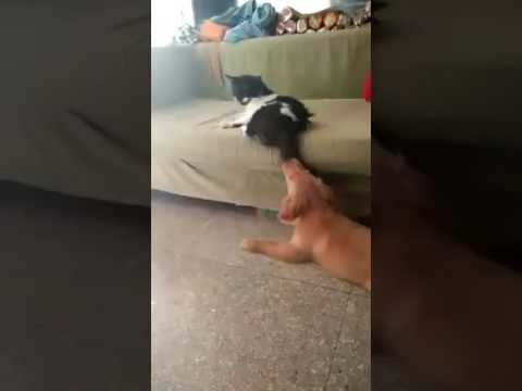 Funny dog cat fight😂