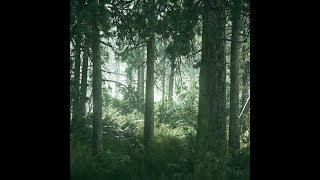⭐ Без категории | Живые обои [TLOU2] Beautiful Forest (HD) | Скачать бесплатно | На рабочий стол ⭐