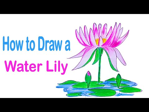 How to Draw a Water Lily Step by Step - 2021||Drawing Ideas||Only Drawing