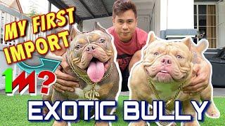 MY FIRST IMPORT EXOTIC BULLY • MILLION PESO DOG?! • Sam Walastik