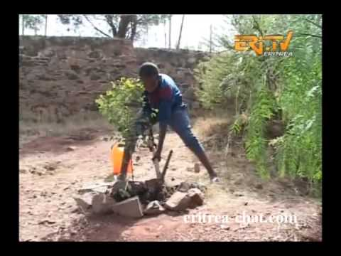 Reforestation in Eritrea of Hamlay Club - Greening Eritrea
