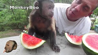Monkey Loves Watermelon!