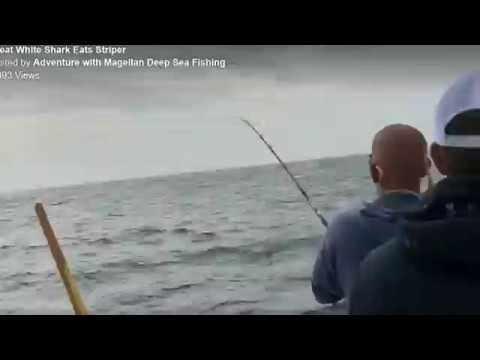 Sharks Steals Fisherman's Catch