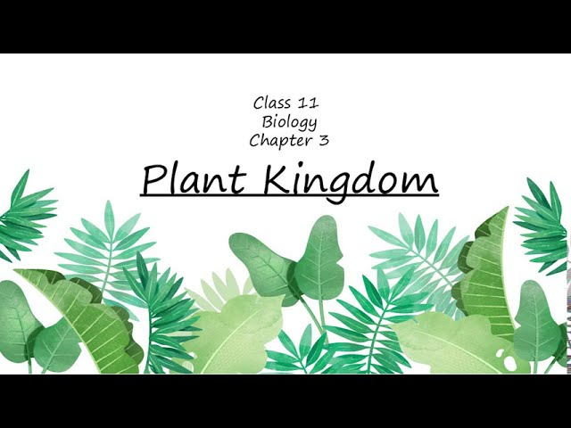 Plant Kingdom Class 11 Biology Chapter 3 | NCERT | NEET | AIIMS 2020