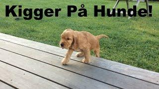Kigger på hunde! - Vlog
