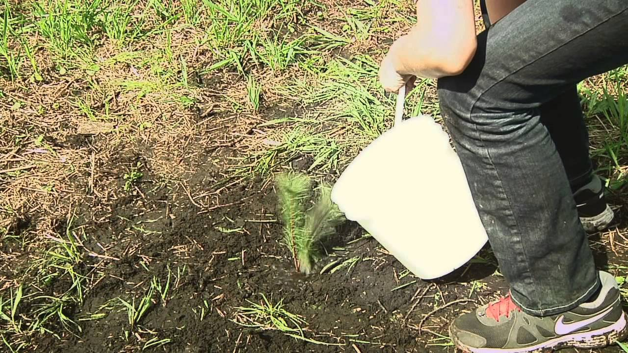 How to Plant Tree Seedlings