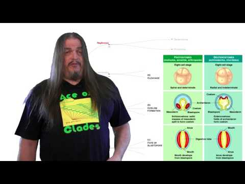 Systematic Classification of Life ep6 - Deuterostomia