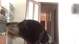 Любовь Собаки//Catlin💕🐶