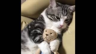 OSM - Funny Cat's Compilation 1