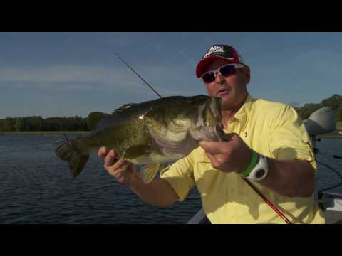 Huge Bass Caught on Stanley Top Toad