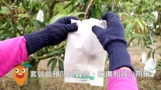 芒果季田園管理影片