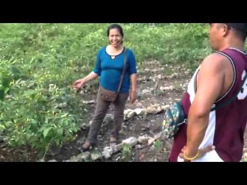 Manong Eddie Garcera Sili farm