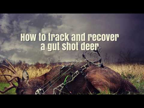 How To Track And Recover A Gut Shot Deer