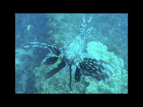 Mozambique Diving Video & Stills