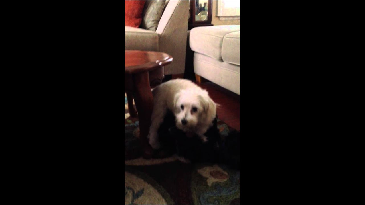 Dogs doing missionary - YouTube