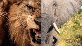 Top 10 der gefährlichsten Tiere