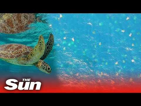 Tens Of Thousands Of Turtles In Rare Sighting Of 'world's Biggest Swarm' Off The Coast Of Australia