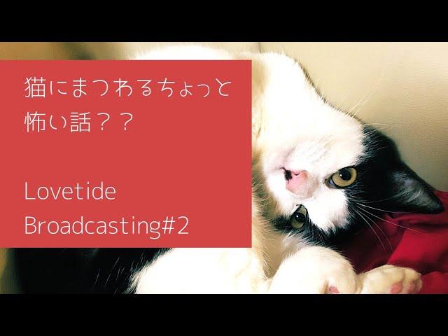 Lovetide radio #2 あなたは信じる?信じない?衝撃的な猫とのエピソードと今後のLovetideの動物愛護との関わり方 2019.3.9