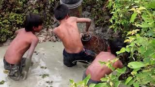 HindiLife -  वाह! बच्चों द्वारा अद्भुत पारंपरिक मछली पकड़ना - हाथ से चावल के खेत में मछलियां कैसे प