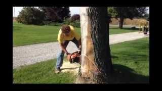 Felling Trees (Bore Cut Method)