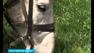 Сельский туризм — новое направление отдыха на Кубани(, 2014-05-11T08:40:45.000Z)