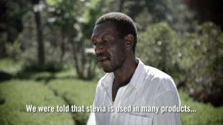 Kenya Farmers Explain Why Stevia Makes Life Sweet