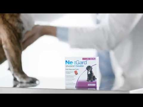 Nexgard Afoxolaner Chews For Dogs 2014  - The New Revolution For Fleas And Ticks