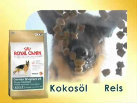 royal canin breed deutscher sch ferhund hundefutter youtube. Black Bedroom Furniture Sets. Home Design Ideas