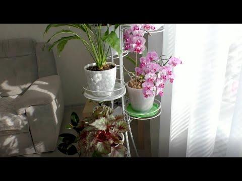 Комнатные растения / Обзор цветочной стойки / House plants