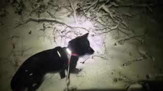 初めての雪の散歩.