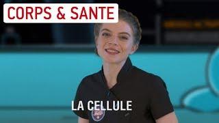 [CAP'TAINE SNAP] Tout savoir sur les cellules du corps humain avec Clémence ! - Science & Vie TV