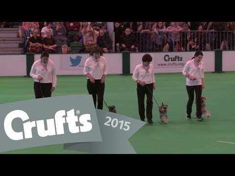 Obreedience - Part 2 - Whippet, Australian Shepherd, Collie & Miniature Schnauzer | Crufts 2015