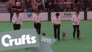 Obreedience - Part 2 - Whippet, Australian Shepherd, Collie & Miniature Schnauzer | Crufts 2015
