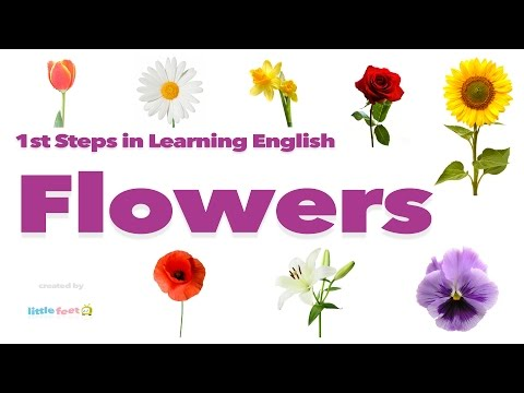 1st Steps in Learning English - Flowers Vocabulary