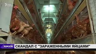 Скандал с  зараженными яйцами  в Европе