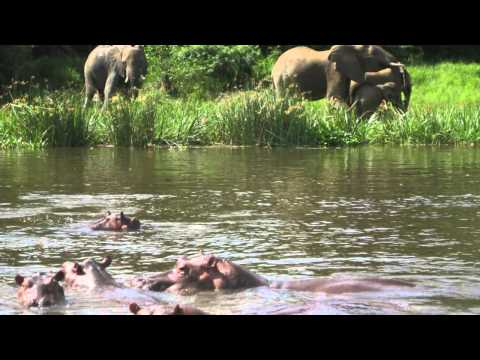 South Sudan Travel Guide: Visit the River Nile & Explore Boma National Park