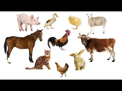 Учим Животных по Системе Монтессори - Угадай чья Тень | Развивающие Мультики для Детей