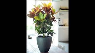 Как выбирать  декоративные комнатные растения