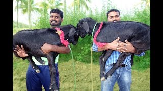 TWO FULL GOAT Mutton BIRYANI  | VILLAGE FOOD