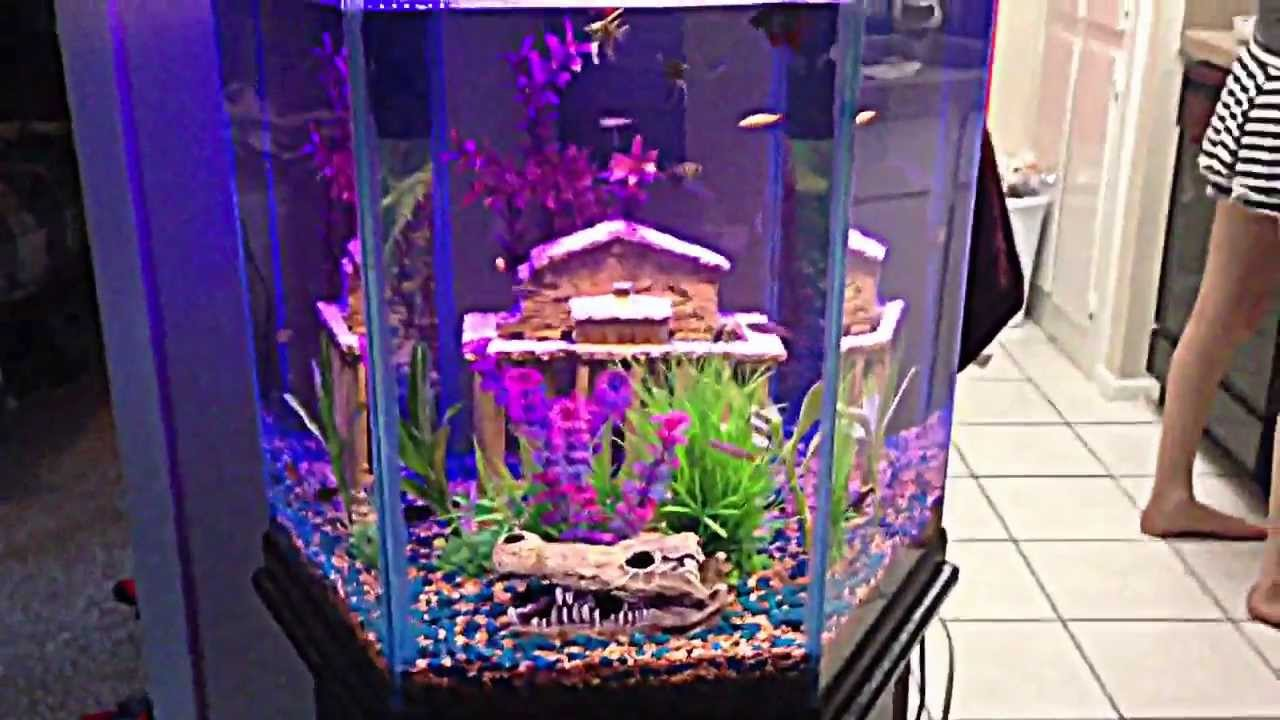 60 gal hexagon freshwater community tank with aquascape setting