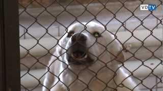 Фонд защиты животных Покровитель 25 января 2011