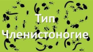 10.1 Членистоногие - общая характеристика (7 класс) - биология, подготовка к ЕГЭ и ОГЭ 2018