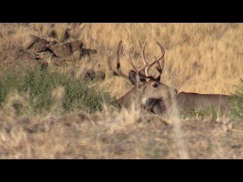 Public Land, Spot n Stalk,  Archery Mule Deer, Washington State. S3Ep5
