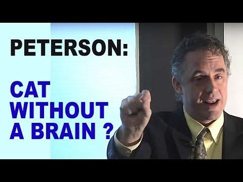 Jordan Peterson: What Does Your Hypothalamus Do?