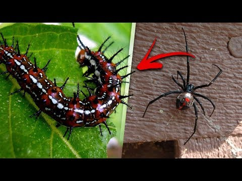 5 SCARY Poisonous Creatures That Can Live in Your Home!