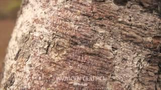 El Milagro Del Palo Santo Cambiopositivoutpl Youtube