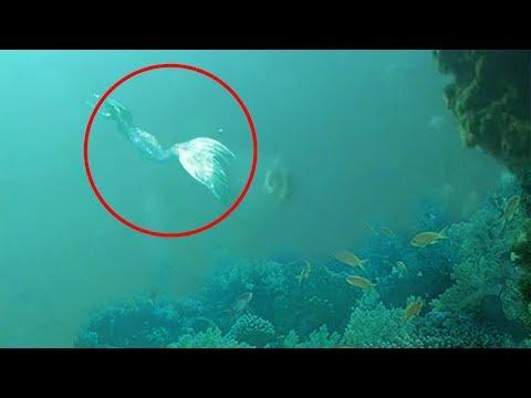 7 Asombrosos Avistamientos Reales De Sirenas