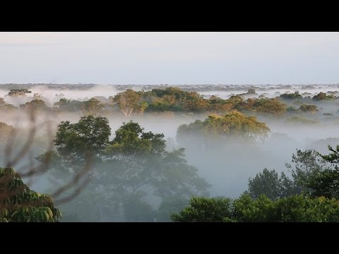 Science Today: Weighing the Rainforest | California Academy of Sciences