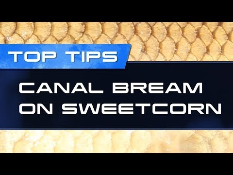 Top Fishing Tips – Canal Bream On Sweetcorn
