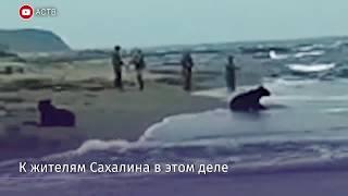 Ведмеді приєдналися до риболовлі місцевих жителів на Сахаліні